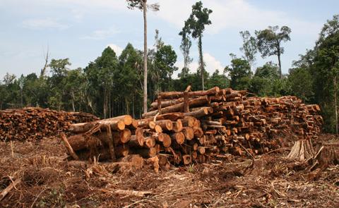 rfp_lumber_480x295